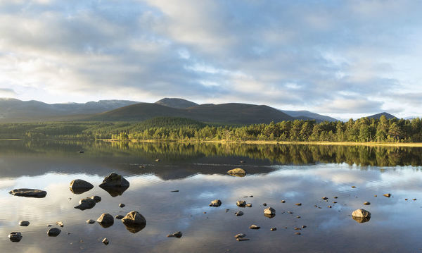 Pine forest and mountains reflected in Loch Morlich, Rothiemurchus, Cairngorms National Park, Scotland, UK, September 2016