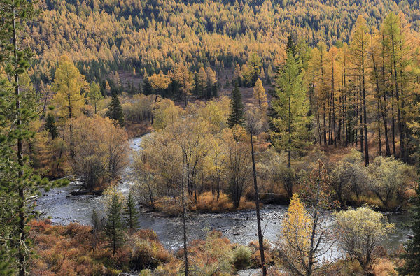 Colourful autumn views in Altai Mountains at the river Multa in Katunsky Range, with