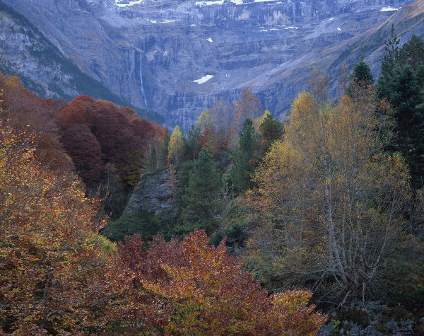 Forest in the Cirque de Gavarnie, Pyrenees, France, October 2008