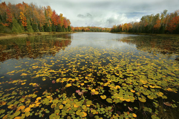 Lake and mixed woodland in autumn, Upper Peninsula, Michigan, USA