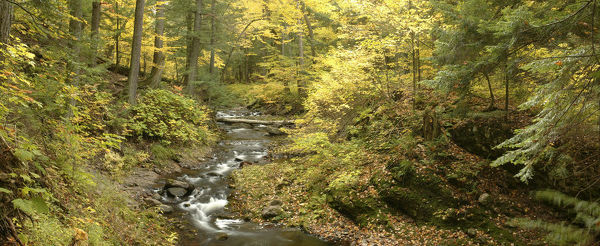 Little Carp River and autumn woodland, Porcupine Mountains State Park, Upper Peninsula, Michigan, USA