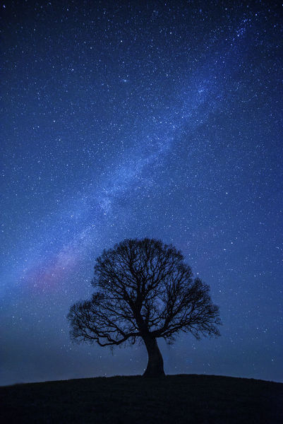 Oak tree quercus robur silhouetted against night sky with stars oak tree quercus robur silhouetted against night sky with stars brecon beacons thecheapjerseys Image collections