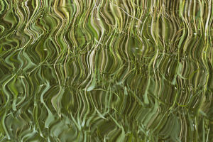 green/abstract reflection reeds rippled water westhay