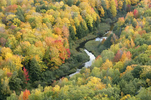 autumn/aerial view little carp river early autumn woodland