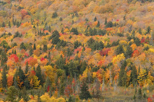 autumn/aerial view mixed deciduous coniferous trees early