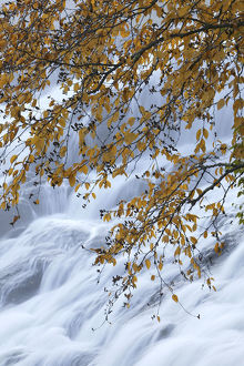 autumn/autumn leaves branch overhanging waterfall bond falls