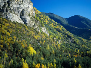 latest highlights/highlights 2009/autumnal trees rocky outcrop sierra del balcon