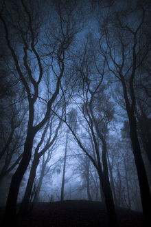 latest highlights/highlights 2011/beech woodland dense fog derbyshire uk november