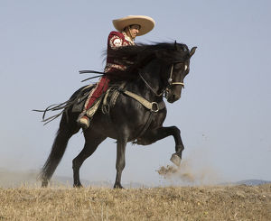 latest highlights/highlights 2009/charro black andalusian stallion galloping ojai