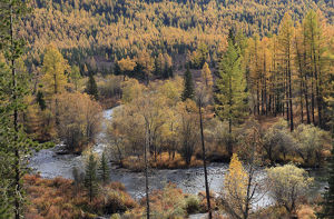 forests world/colourful autumn views altai mountains river multa