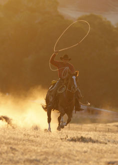 latest highlights/highlights 2009/cowboy galloping swinging rope lassoo sunset