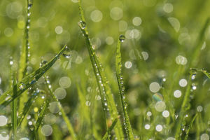 phil savoie/dewdrop grass bokeh affect monmouthshire wales
