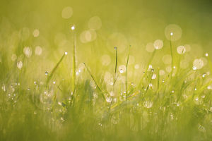 phil savoie/dewdrops grass bokeh affect monmouthshire wales