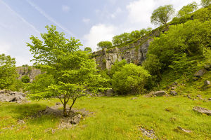 green/disused limestone quarry supporting wide range