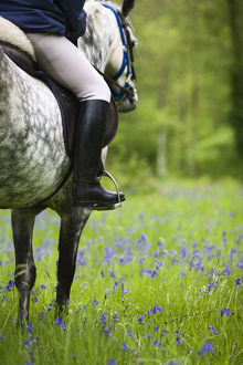latest highlights/highlights 2009/horse rider trekking bluebell wood brecon beacons