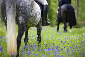 latest highlights/highlights 2009/horse riding bluebell wood brecon beacons national