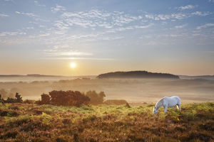 2020vision/1/new forest pony grazing latchmore dawn view dorridge