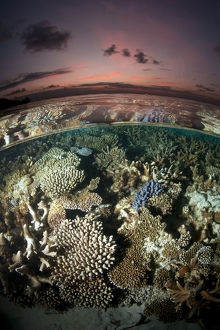 latest highlights/highlights 2013/reef surface shallow waters sunset covered hard