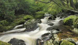 robert thompson/river shimna tollymore forest park newcastle