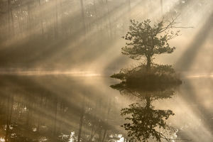 tranquility/small island pine tree first rays sunlight misty