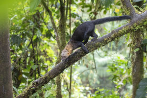 july 2019 highlights/tayra eira barbara climbing tree rainforest