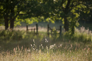 2020vision/1/wildlife rich hay meadow early morning light summer